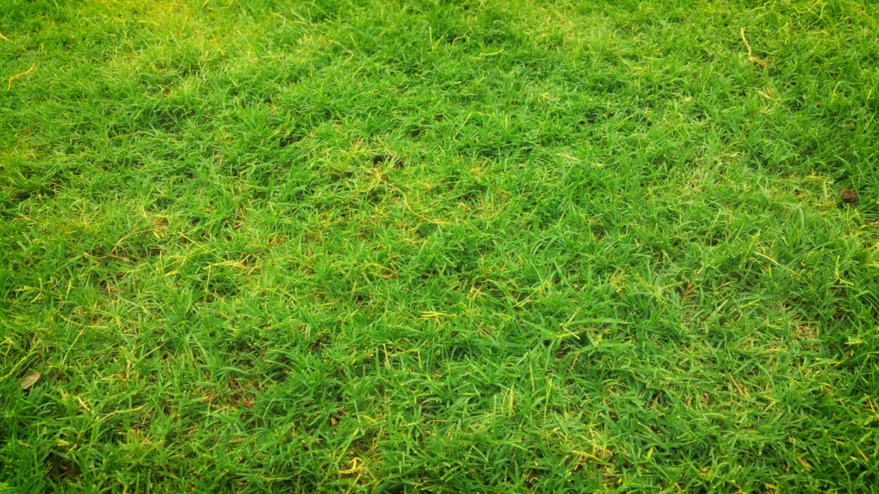 fake grass Sydney product